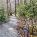 Start of the trail. The blue markers lead to Mount Mitchell.- Mount Mitchell via Black Mountain Campground