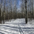 If present, do not walk on the cross country ski tracks- North Country Trail, Shingobee Recreational Area