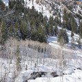 The creek that runs along most of the trail.- Lake Blanche Snowshoe