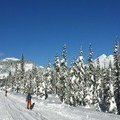 Skiers head down the common corridor route. South Sister and Broken Top in the distance.- Todd Lake Cross-country Ski + Snowshoe