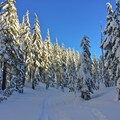 Among the trees on the Todd Lake Trail.- Todd Lake Cross-country Ski + Snowshoe