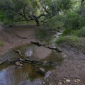 There may be several slick, muddy areas that require some leaping to cross.- Escondido Falls