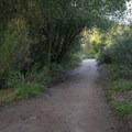 The trail runs alongside the creek through a shady and lush canyon.- Escondido Falls