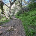The trail starts with a climb through lush airy forest.- Tangerine Falls