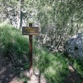 Signs mark the early portions of the trail; however, some off-trail climbing up a worn path is necessary.- Tangerine Falls