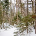 Trail to Rocky Falls Lean-To. Accommodation here is free and first-come, first-served..- MacNaughton Mountain Snowshoe via the Wallface Ponds