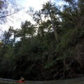 Dwarfed in comparison to the redwoods.- Big Sur River: Gorge to Andrew Molera