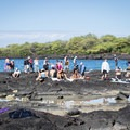 Hōnaunau Bay has excellent snorkeling, and Two Step is the easiest place to access it.- Pae'a / Two Step at Hōnaunau Bay