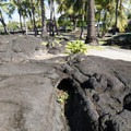 When molten lava surrounds a tree and hardens, the tree decomposes over time and leaves a mold.- Pu'uhonua O Hōnaunau National Historical Park