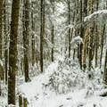 Gorge Brook Trail.- Moosilauke Mountain