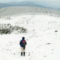 Summit plateau of Mount Moosilauke.- Moosilauke Mountain