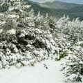 Trail just below the summit plateau of Mount Moosilauke.- Moosilauke Mountain