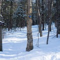 The first trail junction, continue right to follow the Nebraska Notch Trail- Taylor Lodge Snowshoe via Nebraska Notch