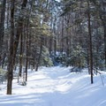 Sunlight filters through the trees early in the hike- Taylor Lodge Snowshoe via Nebraska Notch