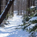 The trail climbs gradually through the open forest- Taylor Lodge Snowshoe via Nebraska Notch