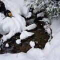 Stream crossing on the ascent to Pratt Mountain.- Pratt Mountain