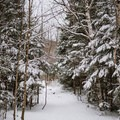 The trail is easy to follow.- Mount Willard: Winter Hike
