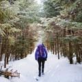 Gradual climb en route to Willard Mountain.- Mount Willard: Winter Hike