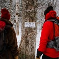 Trail junction after a tenth of a mile.- Mount Willard: Winter Hike