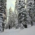 Even the road walk is a pretty winter wonderland.- Maiden Peak Cabin Snowshoe via Gold Lake Sno-Park