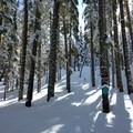 The winter trails near Willamette Pass are well-marked.- Maiden Peak Cabin Snowshoe via Gold Lake Sno-Park