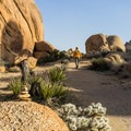 Split Rock Trail in Joshua Tree National Park.- Split Rock Loop Hike