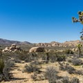 Joshua trees and granite rocks typical of Joshua Tree National Park.- Geology Tour Road