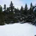 The clearing at the junction of the Monroe and Long Trail.- Camels Hump Via The Burrows Trail