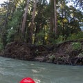Redwoods tower overhead along the river.- Big Sur River: Gorge to Andrew Molera