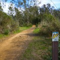 The path to the main monarch grove is marked.- Ellwood Butterfly Grove