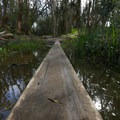 A low bridge through a marsh leading to the butterfly grove.- Ellwood Butterfly Grove