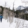 Sections of the trail may be packed enough to support shoes with microspikes.- Secret Falls Snowshoe