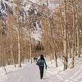 Returning to the packed section of trail along the Secret Falls Snowshoe.- Secret Falls Snowshoe