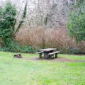 Picnic table and fire pit. - Lodgepole Picnic Area