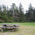 Lodgepole Picnic Area in the Oregon Dunes National Recreation Area.- Lodgepole Picnic Area
