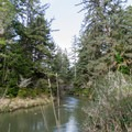 Siltcoos River near the Lodgepole Picnic Area.- Lodgepole Picnic Area