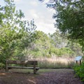 A bench near the lagoon is a perfect spot to rest and look for birds.- Lagoon Loop Trail