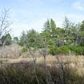 Lagoon Loop Trail.- Lagoon Loop Trail