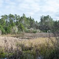 The lagoon is home to many bird and wildlife species.- Lagoon Loop Trail