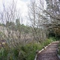 Lagoon Loop Trail on the Central Oregon Coast.- Lagoon Loop Trail