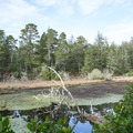 The lagoon is home to a variety of plants and animals.- Lagoon Loop Trail