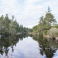 The lagoon is home to many plant and animal species. - Lagoon Loop Trail