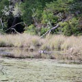 River otter in the lagoon.- Lagoon Campground