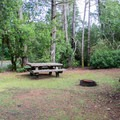 Typical campsite in Lagoon Campground.- Lagoon Campground
