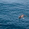 An iguana swimming in the ocean.- Gladden Spit + Silk Caye Marine Reserve