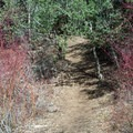 The trail goes back into the forest after Chimney Flats.- Cedar Trail