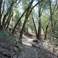 The trail is relatively steep for the first half of the hike.- Cedar Trail