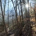 Henry Hollow Trail.- Henry Hollow Loop
