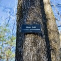 One of the many tree species labeled along trail.- Couchville Lake