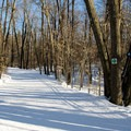 Trail 1 in Gatineau Park.- Gatineau Park Cross Country Skiing